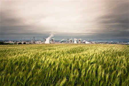Grangemouth Petrochemical Plant in Background and Wheat Field in Foreground, West Lothian, Scotland, UK Stock Photo - Rights-Managed, Code: 700-01538907
