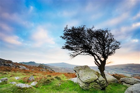 dartmoor national park - Hawthorn Tree on Tor, Saddle Tor, Dartmoor, Devon, England Stock Photo - Rights-Managed, Code: 700-01953802
