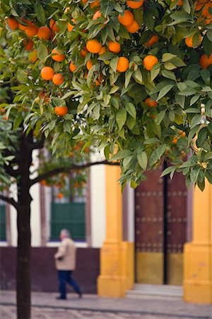 Orange Tree in City, Seville, Spain Stock Photo - Rights-Managed, Code: 700-02063670