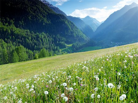 Alpine Meadow, Nationalpark Hohe Tauern, Austria Stock Photo - Rights-Managed, Code: 700-02121177