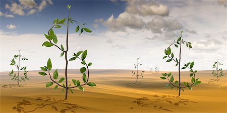 Plants Shaped like Dollar Signs Growing in Desert Landscape Stock Photo - Rights-Managed, Code: 700-02121573