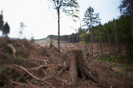 forestry - Deforestation, Harz National Park, Saxony-Anhalt, Germany Stock Photo - Rights-Managed, Code: 700-02130488