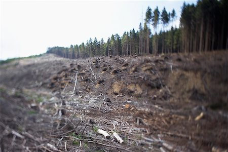 forestry - Deforestation, Harz National Park, Saxony-Anhalt, Germany Stock Photo - Rights-Managed, Code: 700-02130490