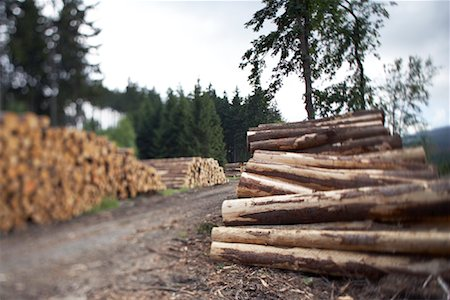 Stacks of Lumber, Harz National Park, Saxony-Anhalt, Germany Stock Photo - Rights-Managed, Code: 700-02130511
