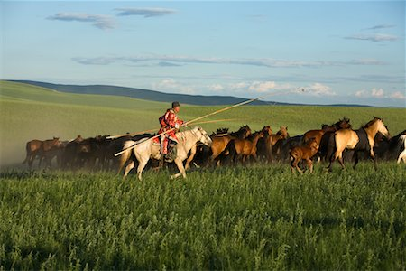 Horseman Herding Horses, Inner Mongolia, China Stock Photo - Rights-Managed, Code: 700-02264839