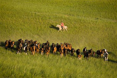 Horseman Herding Horses, Inner Mongolia, China Stock Photo - Rights-Managed, Code: 700-02264842
