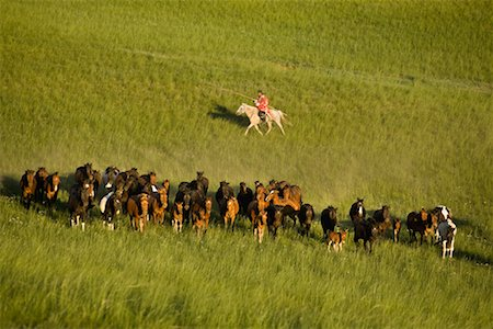 Horseman Herding Horses, Inner Mongolia, China Stock Photo - Rights-Managed, Code: 700-02264842
