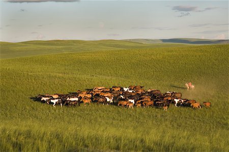 Horseman With Herd of Horses, Inner Mongolia, China Stock Photo - Rights-Managed, Code: 700-02265735