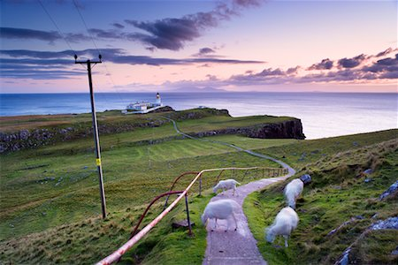 Sheep on Path, Neist Point, Isle of Skye, Scotland Stock Photo - Rights-Managed, Code: 700-02260039