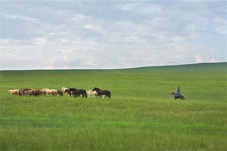 Horseman Rounding up Horses in Field, Inner Mongolia, China Stock Photo - Rights-Managed, Code: 700-02263878