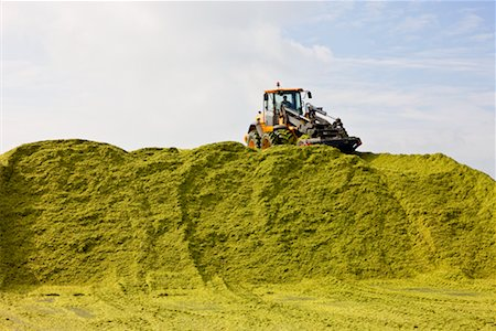 Tractor Piling Corn Silage for Biogas Stock Photo - Rights-Managed, Code: 700-02288931