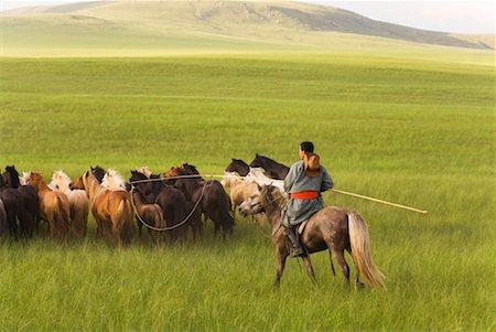 Horseman Herding Horses, Innner Mongolia, China Stock Photo - Rights-Managed, Code: 700-02314928