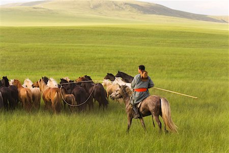 Horseman Herding Horses, Innner Mongolia, China Stock Photo - Rights-Managed, Code: 700-02314928