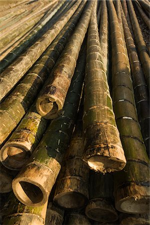 Bamboo, Guilin, China Stock Photo - Rights-Managed, Code: 700-02385940