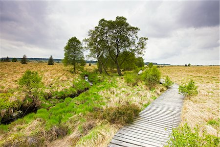 Boardwalk in Moorland, Haute Fagnes, Wallonia, Belgium Stock Photo - Rights-Managed, Code: 700-02428415