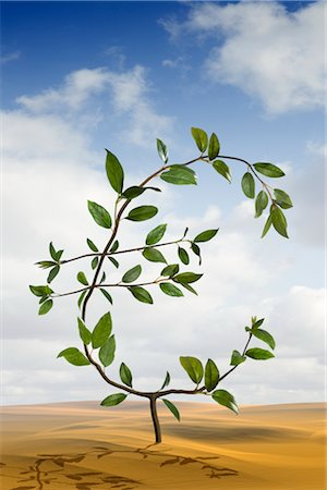 Euro-Shaped Plant Growing in the Desert Stock Photo - Rights-Managed, Code: 700-02429137