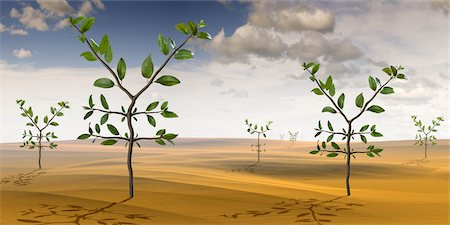 Yen-Shaped Plants Growing in the Desert Stock Photo - Rights-Managed, Code: 700-02429139