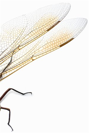 dragon fly - Close-Up of Dragonfly Wings and Legs Stock Photo - Rights-Managed, Code: 700-02594147