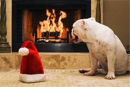 dog in heat - English Bulldog Sitting Next to Santa Hat, Looking at Fireplace Stock Photo - Rights-Managed, Code: 700-02659927
