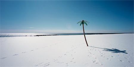 david zimmerman - Plastic Palm Tree in the Snow, Coney Island, New York, USA Stock Photo - Rights-Managed, Code: 700-02694096