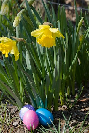 dyed - Daffodils and Easter Eggs Stock Photo - Rights-Managed, Code: 700-02694511