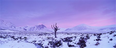 panoramic winter scene - Dead Tree on Rannoch Moor in Winter at Dawn, Highlands, Scotland Stock Photo - Rights-Managed, Code: 700-02723156