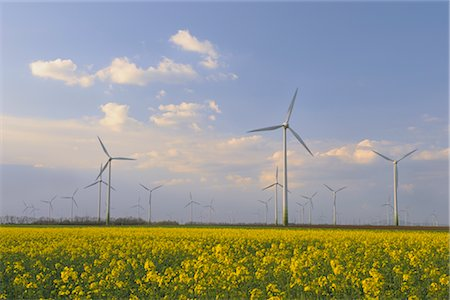 Wind Farm and Canola Field, Burgenland, Austria Stock Photo - Rights-Managed, Code: 700-02756624