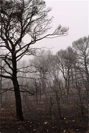 Aftermath of Forest Fire, Zaragoza Province, Aragon, Spain Stock Photo - Rights-Managed, Code: 700-02757576