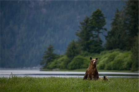 Mother Grizzly Bear with Cub, Glendale Estuary, Knight Inlet, British Columbia, Canada Stock Photo - Rights-Managed, Code: 700-02833998