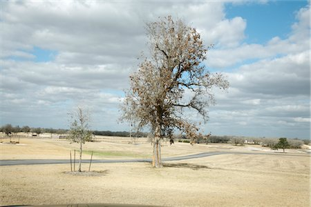 Tree in Barren Field, Somerville, Texas, USA Stock Photo - Rights-Managed, Code: 700-02912115