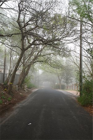 Tree-lined Street in the Morning Stock Photo - Rights-Managed, Code: 700-02922842