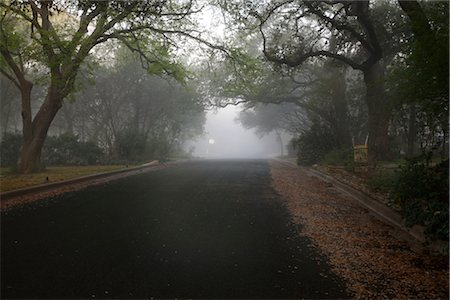 Tree-lined Street in the Morning Stock Photo - Rights-Managed, Code: 700-02922843