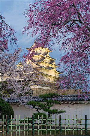 Cherry Tree, Himeji Castle, Himeji, Japan Stock Photo - Rights-Managed, Code: 700-02935608