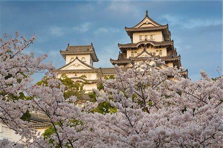 Cherry Tree, Himeji Castle, Himeji, Japan Stock Photo - Rights-Managed, Code: 700-02935609