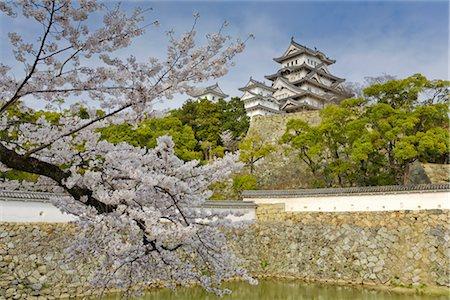 Cherry Tree, Himeji Castle, Himeji, Japan Stock Photo - Rights-Managed, Code: 700-02935610
