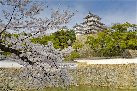 Cherry Tree, Himeji Castle, Himeji, Japan Stock Photo - Rights-Managed, Code: 700-02935610