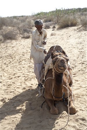 rajasthan camel - Camels and Driver, Thar Desert, Rajasthan, India Stock Photo - Rights-Managed, Code: 700-02958004