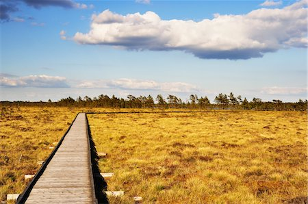 Boardwalk, Store Mosse National Park, Sweden Stock Photo - Rights-Managed, Code: 700-02967796