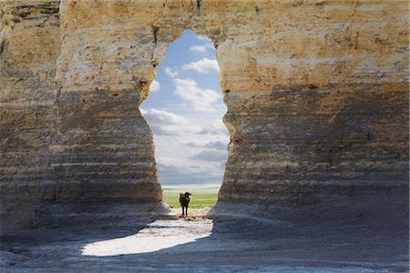 Cow Looking Through Arch, Monument Rocks, Gove County, Kansas, USA Stock Photo - Rights-Managed, Code: 700-03017674