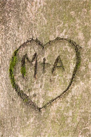 Initials and Heart in Tree Trunk Stock Photo - Rights-Managed, Code: 700-03067919
