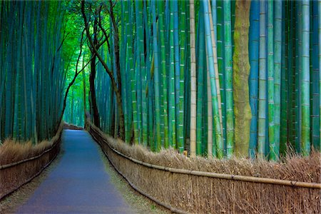 Bamboo Lined Pathway at Dusk, Kyoto, Japan Stock Photo - Rights-Managed, Code: 700-03152252