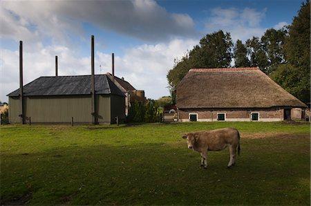 Farm, Vilsteren, Ommen, Salland, Overijssel, Netherlands Stock Photo - Rights-Managed, Code: 700-03161661