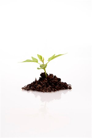 sprout - Still Life of Seedling Stock Photo - Rights-Managed, Code: 700-03403883