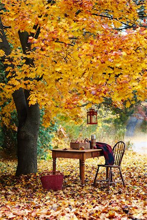 Table and Chair by Tree in Autumn Stock Photo - Rights-Managed, Code: 700-03439609