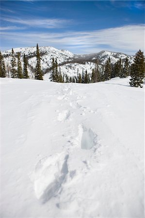 Footprints in Snow near Steamboat Springs, Colorado, USA Stock Photo - Rights-Managed, Code: 700-03439854