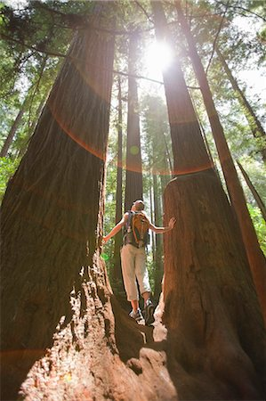 Woman Hiking Through a Forest of Old Growth Redwoods, Near Santa Cruz, California, USA Stock Photo - Rights-Managed, Code: 700-03439964