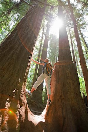 Woman Hiking Through a Forest of Old Growth Redwoods, Near Santa Cruz, California, USA Stock Photo - Rights-Managed, Code: 700-03439965