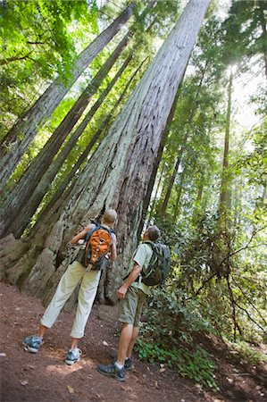 Hikers Looking at Old Growth Redwoods, Near Santa Cruz, California, USA Stock Photo - Rights-Managed, Code: 700-03439961