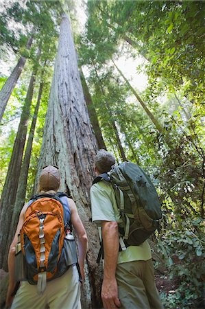Hikers Looking at Old Growth Redwoods, Near Santa Cruz, California, USA Stock Photo - Rights-Managed, Code: 700-03439962
