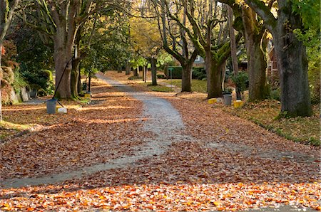 Street in Autumn, Oregon, USA Stock Photo - Rights-Managed, Code: 700-03446109